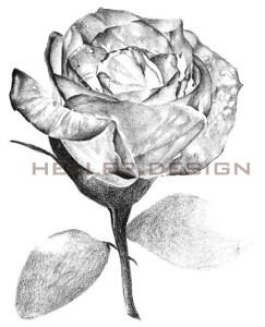 Bleistift auf Canson Papier DIN A 4 | 155,00 € inkl. Versand • zertifiziertes Original