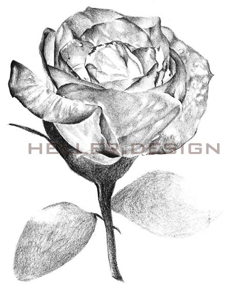 • Fine Art Galerie • Rose •
